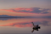 Salton Sea Prints - Serenity Now Print by Peter Tellone