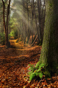 Light Rays Photos - Serenity Of The Forest by Bill  Wakeley