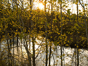 Tara Lynn - Setting Sun 3
