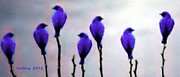 Seven Birds Of Purple Print by Bruce Nutting