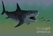 Megalodon Posters - Several Tuna Fish Try To Escape Poster by Corey Ford
