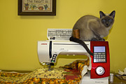 Tonkinese Posters - Sewing Supervisor Poster by Sally Weigand