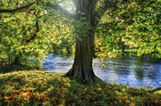 Sun River Prints - Shades of Autumn Print by Ian Mitchell