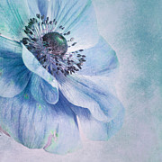 Anemones Framed Prints - Shades Of Blue Framed Print by Priska Wettstein