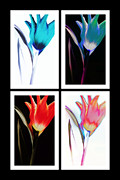 Thomas Born Acrylic Prints - Shades Of Colour  Acrylic Print by Thomas Born