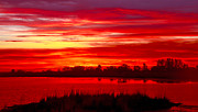 Cattails Photos - Shades Of Red by Robert Bales