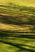 Linda Knorr Shafer - Shadow Grass