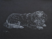 Pooch Drawings Posters - Shadow Poster by Michele Myers