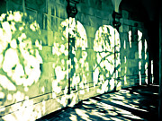 Photography By Colleen Kammerer Photos - Shadow Play by Colleen Kammerer