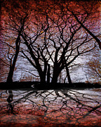 Autumn Trees Metal Prints - Shadow Secrets Metal Print by Bob Orsillo