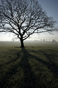 Great Britain Art - Shadow Tree by Anne Gilbert