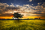 Pasture Scenes Photo Posters - Shadows At Sunset Poster by Debra and Dave Vanderlaan