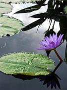 Eric Schiabor Prints - Shadows on a Lily Pond Print by Eric  Schiabor