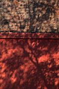 Shadows On The Wall Print by Karol  Livote