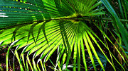 Florida House Prints - Shadows - Palm Fronds By Sharon Cummings Print by Sharon Cummings
