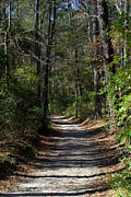 Jogging Posters - Shady Forest Path Poster by Gerald Marella