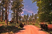 Country Dirt Roads Posters - Shady Lane in Custer State Park Poster by John Malone