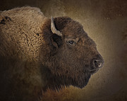 Buffalo Metal Prints - Shaggy One Metal Print by Ron  McGinnis