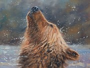 Grizzly Bear Paintings - Shake it by David Stribbling