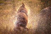 Jenny Rainbow - Shaking Beast