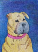 Blue Collar Drawings Prints - Shar-Pei Roxy Print by Carol Hamby