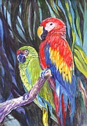 Macaw Drawings - Sharing a Perch by Carol Wisniewski