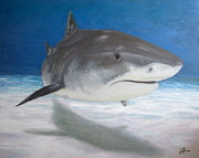 Vicious Painting Prints - Shark Print by Julie Neuman