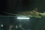 Attraction Art - Shark - National Aquarium in Baltimore MD - 121212 by DC Photographer