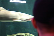 Shark Posters - Shark - National Aquarium in Baltimore MD - 12122 Poster by DC Photographer
