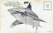 Sharks Mixed Media Posters - Shark Postcard Poster by Sarah Sutherland