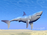 Underwater View Digital Art - Shark Swimming Underwater by Elena Duvernay