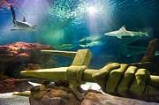 Shark Tank Trident Print by Bill Pevlor