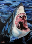 White Shark Prints - Sharks Get Smart Print by Lambert Aaron