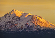 Mount Shasta Photos - Shasta Glow by Loree Johnson