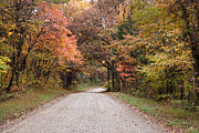 Fall Road Photos - Shawnee Forest Road by Sandy Keeton