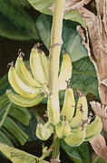 Yellow Bananas Paintings - She Has Gone Bananas by Karen Richardson