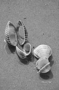 Seashell Art Prints - She Sells Sea Shells in Black and White Print by Suzanne Gaff