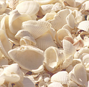 Beach Photograph Posters - She Sells Seashells Poster by Kim Hojnacki