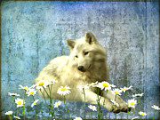 Wolf Digital Art Metal Prints - She Wolf Metal Print by Sharon Lisa Clarke