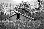 Shed Photo Originals - Shed by Tim Hauser