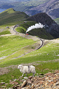 Idyllic Art - Sheep and mountain railway by Jane Rix