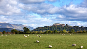 Famous Architecture Prints - Sheep and Stirling Castle Print by Jane Rix
