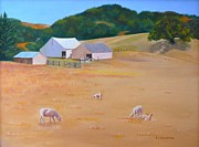 Shorn Sheep Paintings - Sheep at Redhill Farm by K Kingston
