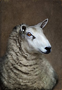 Alone Digital Art Posters - Sheep Poster by Darren Fisher