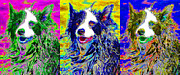 Sheep Dog Three 20130125 Print by Wingsdomain Art and Photography