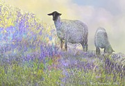 Kari Nanstad - Sheep in Lavender