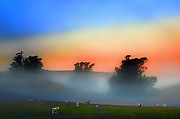 Sonoma County Digital Art Prints - Sheep in the Early Morning Fog Print by Wernher Krutein