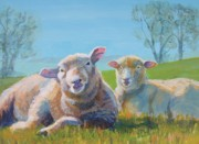Flock Of Sheep Painting Posters - Sheep Lying Down Poster by Mike Jory