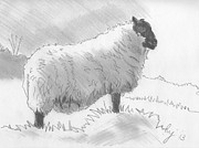 Atmospheric Drawings Prints - Sheep Sketch Print by Mike Jory