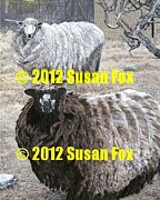 Susan Fox - Sheep Thrills